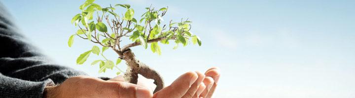 El AMB se compromete contra el cambio climático en el Día Mundial del Medio Ambiente