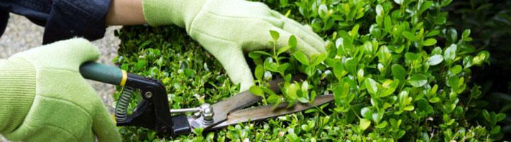 Tudela adjudica a Acciona el contrato de mantenimiento de zonas verdes, parques infantiles y bancos