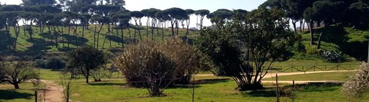 El Parque Moret de Huelva contará con su primera charca destinada a anfibios