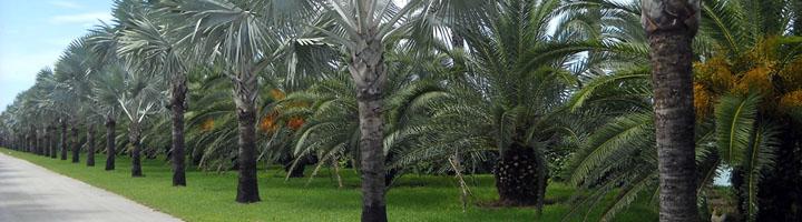 La Aldea de San Nicolas finaliza el plan estratégico de zonas verdes y jardines en el municipio
