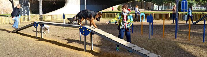 Circuito canino agílity: ¡Haciendo deporte con tu mascota!