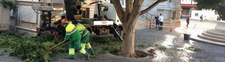 Sevilla inicia un nuevo modelo de mantenimiento del arbolado y zonas verdes con 14,3 millones de euros de presupuesto anual