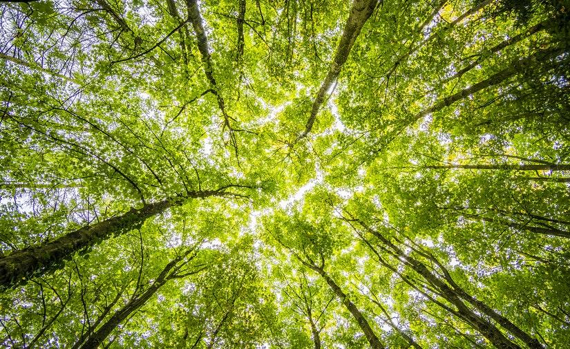 ACCIONA, seleccionada para el mantenimiento de las zonas verdes de Vigo