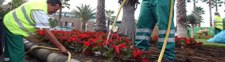 Las Palmas de Gran Canaria saca a concurso el nuevo contrato de mantenimiento de parques y jardines