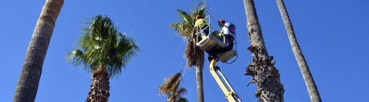 Elda aprueba el contrato de mantenimiento de parques y jardines