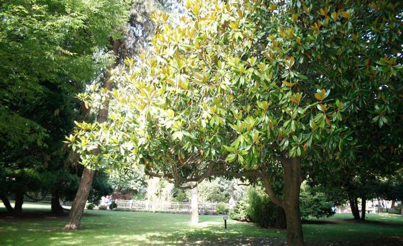 El Ayuntamiento de Oviedo pone en marcha el Programa de fomento de la biodiversidad en los parques y jardines