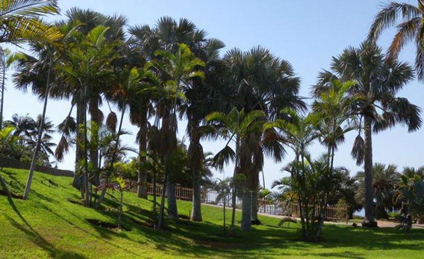 El Cabildo de Tenerife adjudica los contratos de mejora de las zonas verdes de las vías insulares