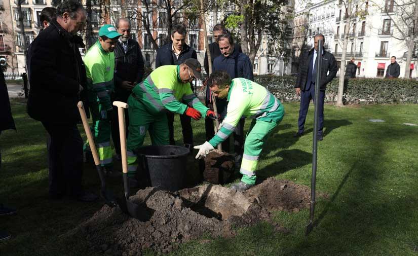 El Retiro, en Madrid, recupera sus tradicionales olmos gracias a nuevos árboles resistentes a la grafiosis
