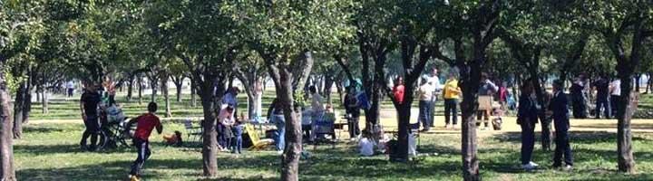 El Ayuntamiento de Utrera saca a concurso el mantenimiento del parque del V Centenario