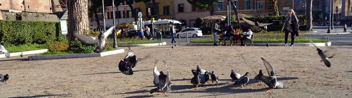 ANECPLA insiste en el necesario control de aves en las ciudades ante la relación de las gaviotas con la resistencia a antibióticos
