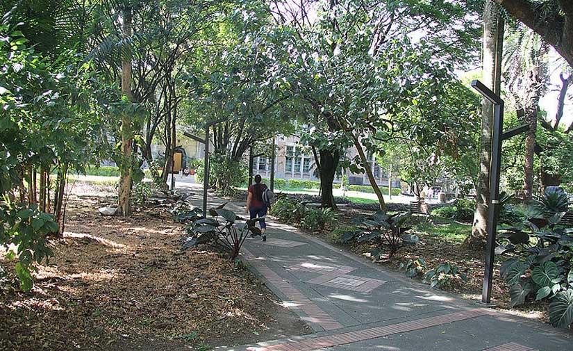 La vegetación es una herramienta clave para regular la temperatura urbana