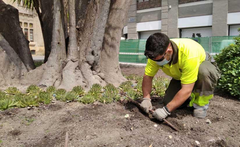 Los parques y jardines de Murcia utilizan un sistema de riego eficiente con el que se ahorra un 30%
