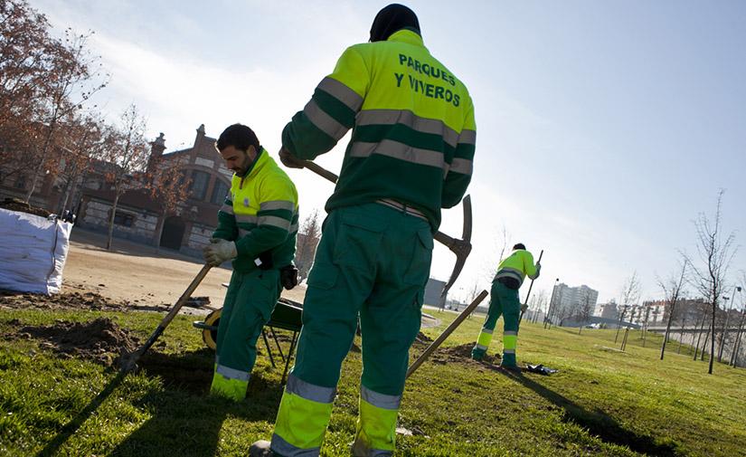 Madrid enriquecerá su patrimonio arbóreo con 7.500 nuevos ejemplares