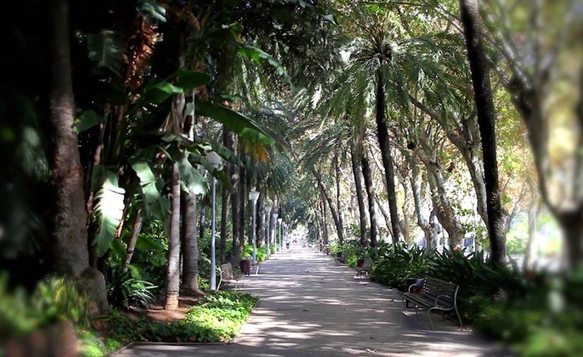 Málaga destina 1,3 millones de euros para mejorar las zonas verdes en varios distritos
