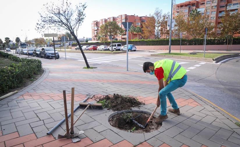 Málaga sumará casi un millar de nuevos árboles