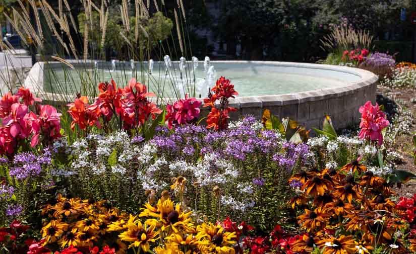Más de 12.000 nuevas plantas con flor embellecen ya Zaragoza en distintos puntos de toda la ciudad
