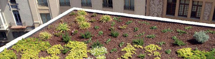 Las cubiertas vegetales como solución sostenible