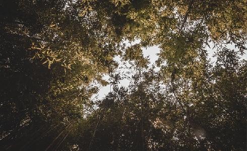 Bosques urbanos, imprescindibles contra el cambio climático