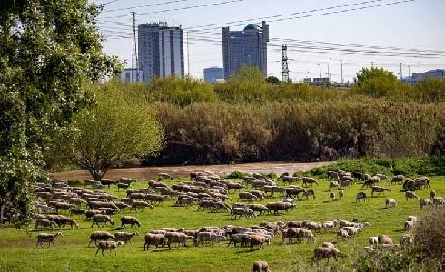 El AMB participa en 'LIFE URBAN GREENING PLANS' para mejorar espacios naturales de los bordes urbanos
