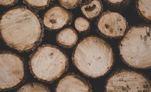 Los beneficios que perdemos cuando se talan árboles porque