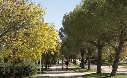Madrid refuerza el cuidado de sus zonas verdes con un incremento del presupuesto del 52,8 %