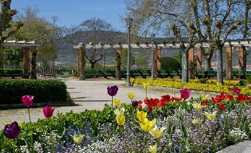 Pamplona renovará las plantas de flor para los parterres de la ciudad