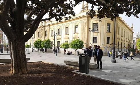 Sevilla elaborará un catálogo de árboles singulares