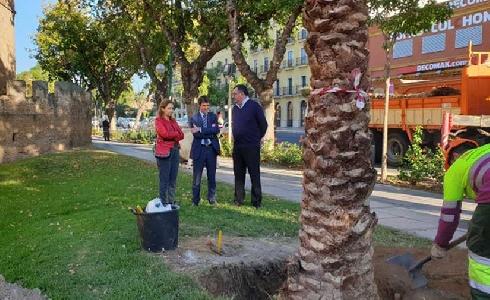 Sevilla incrementa el contrato destinado a la adquisición de arbolado para la campaña de plantaciones 2020-2021