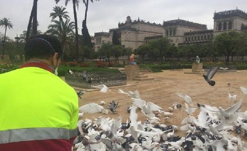 Sevilla invertirá un millón de euros en nuevos vehículos y herramientas para Parques y Jardines