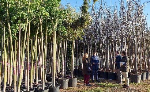 Sevilla licita un contrato para adquirir arbolado que complete la campaña de plantaciones en calles y parques 2019-2020
