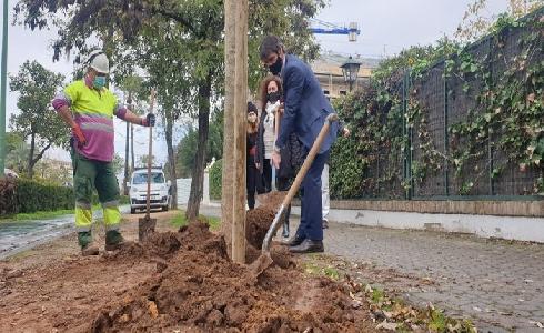 Sevilla supera ya los 1.000 nuevos árboles en alcorques antes vacíos
