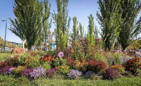 Zaragoza plantará plantas con flor en más de sesenta zonas