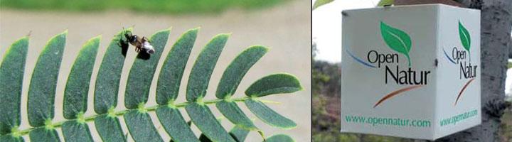 OpenNatur obtiene resultados satisfactorios en el control biológico de plagas de insectos en el arbolado de Lleida