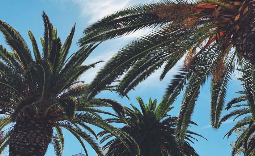 Valencia ha superado las 4.000 actuaciones para mantener los jardines de la ciudad durante el verano