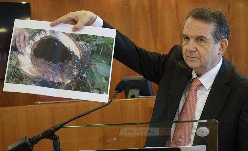 Vigo afronta el fin de la transformación de la Gran Vía con la plantación de árboles y arbustos